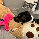 Dog, Canidae, Dog breed, Nap, Pillow, Puppy, Snout, Room, Carnivore, Dog Toy, Stuffed Toy, Companion dog, Comfort, Furniture, Linens, Cushion, Rat Terrier